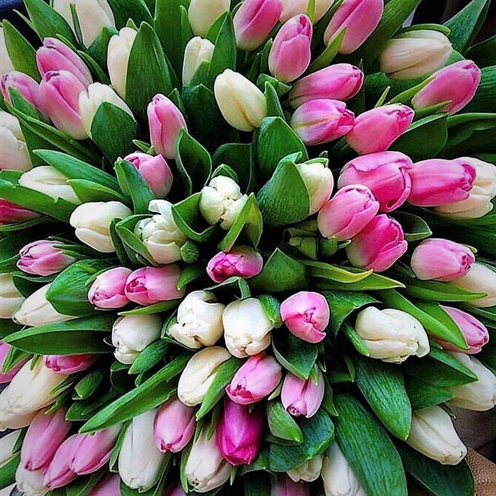 жизнь цветы тюльпаны фото букеты огромные главный