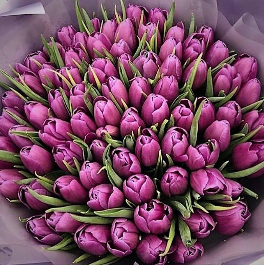 картинки с большими букетами тюльпанов правительство